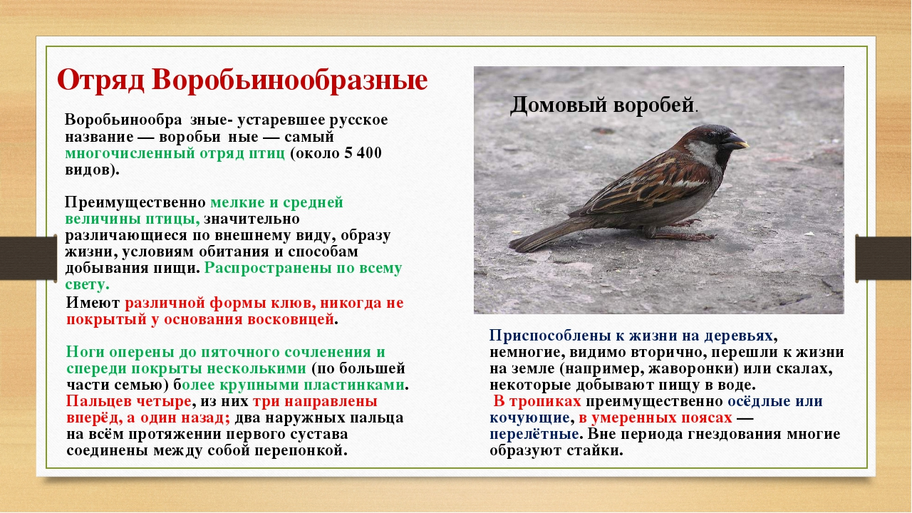 Отряд Воробьинообразные Воробьинообра́зные- устаревшее русское название— вор...