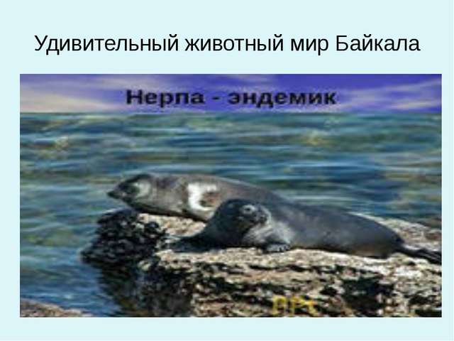Удивительный животный мир Байкала