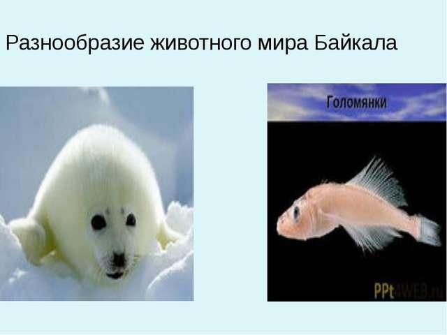 Разнообразие животного мира Байкала