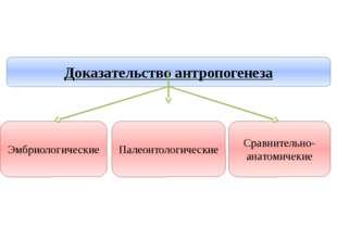 Учитель биологии Деулина Ирина Юрьевна Доказательство антропогенеза Палеонтол
