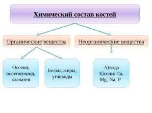 Учитель биологии Деулина Ирина Юрьевна Химический состав костей Органические