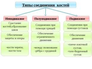 Учитель биологии Деулина Ирина Юрьевна Типы соединения костей Неподвижное Пол