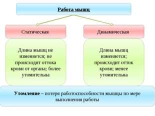 Учитель биологии Деулина Ирина Юрьевна Работа мышц Статическая Динамическая Д