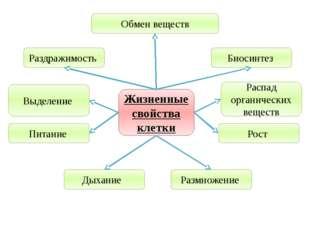 Учитель биологии Деулина Ирина Юрьевна Жизненные свойства клетки Обмен вещест