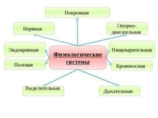 Учитель биологии Деулина Ирина Юрьевна Физеологические системы Покровная Выде