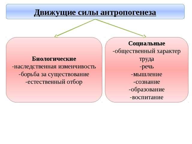 Социальные -общественный характер труда -речь -мышление -сознание -образовани...