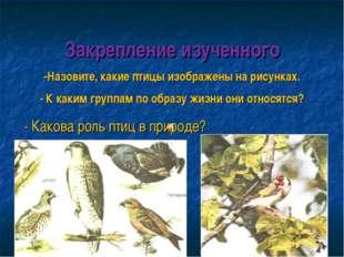 Закрепление изученного -Назовите, какие птицы изображены на рисунках. - К как