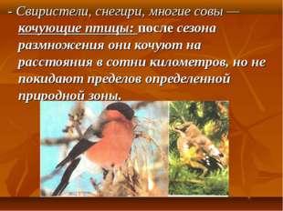 - Свиристели, снегири, многие совы — кочующие птицы: после сезона размножени