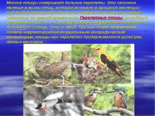 Многие птицы совершают дальние перелеты. Это сезонное явление в жизни птиц,