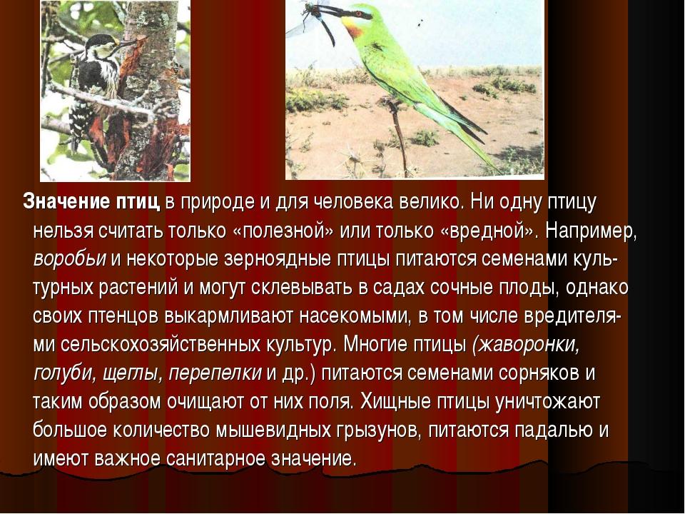 Значение птиц в природе и для человека велико. Ни одну птицу нельзя считать...