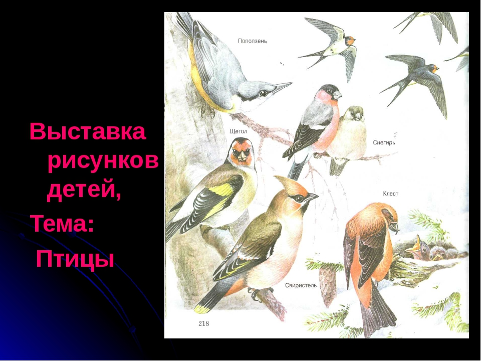Выставка рисунков детей, Тема: Птицы