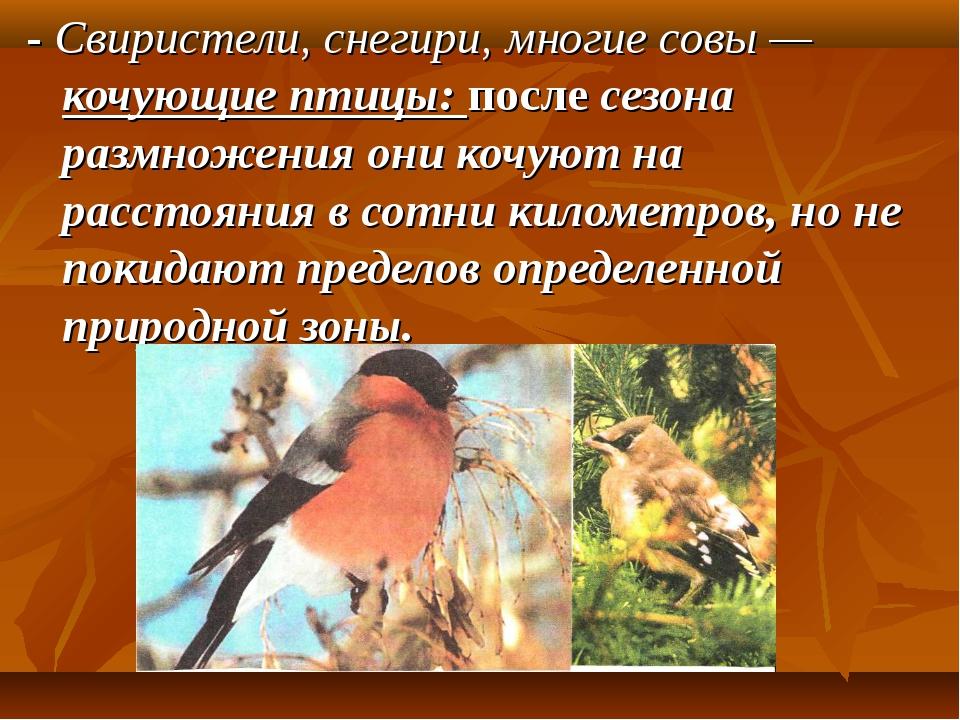 - Свиристели, снегири, многие совы — кочующие птицы: после сезона размножени...