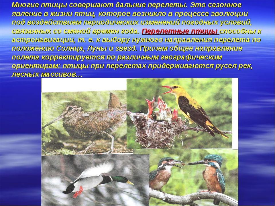 Многие птицы совершают дальние перелеты. Это сезонное явление в жизни птиц,...