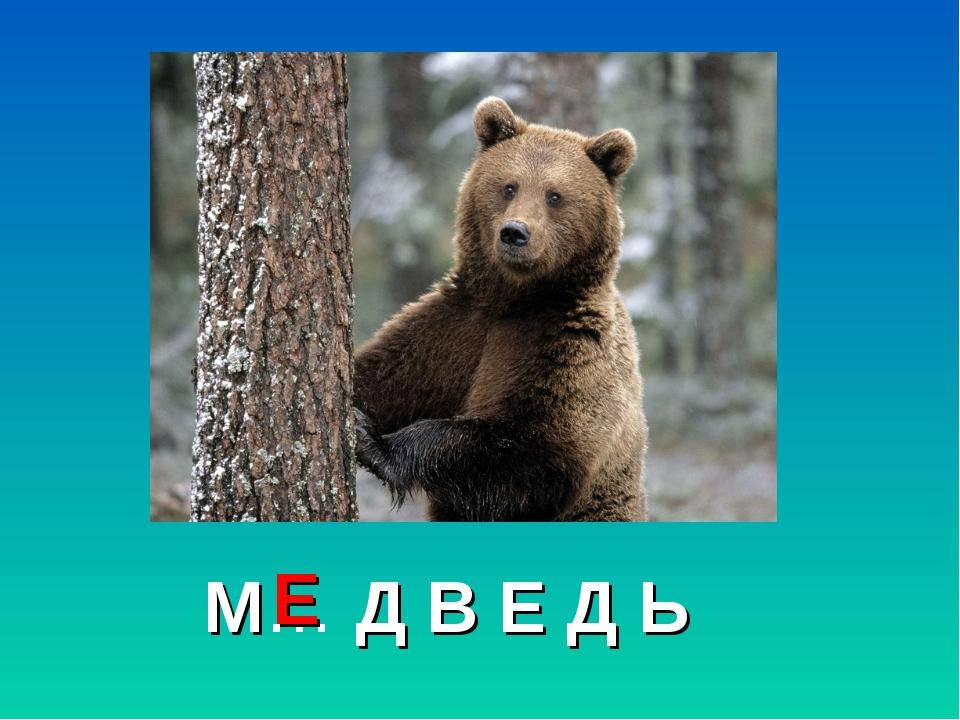 М… Д В Е Д Ь Е