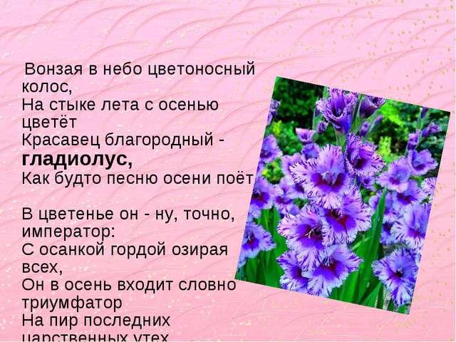 Вонзая в небо цветоносный колос, На стыке лета с осенью цветёт Красавец благ...