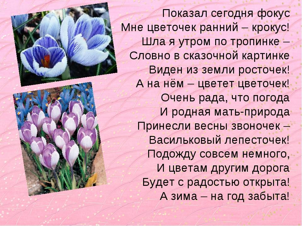 Показал сегодня фокус Мне цветочек ранний – крокус! Шла я утром по тропинке –...