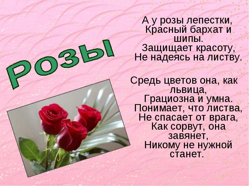 А у розы лепестки, Красный бархат и шипы. Защищает красоту, Не надеясь на ли...
