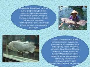 Изучавший чучело и остатки рыбы профессор Дж. Смит, понял что она принадлежит