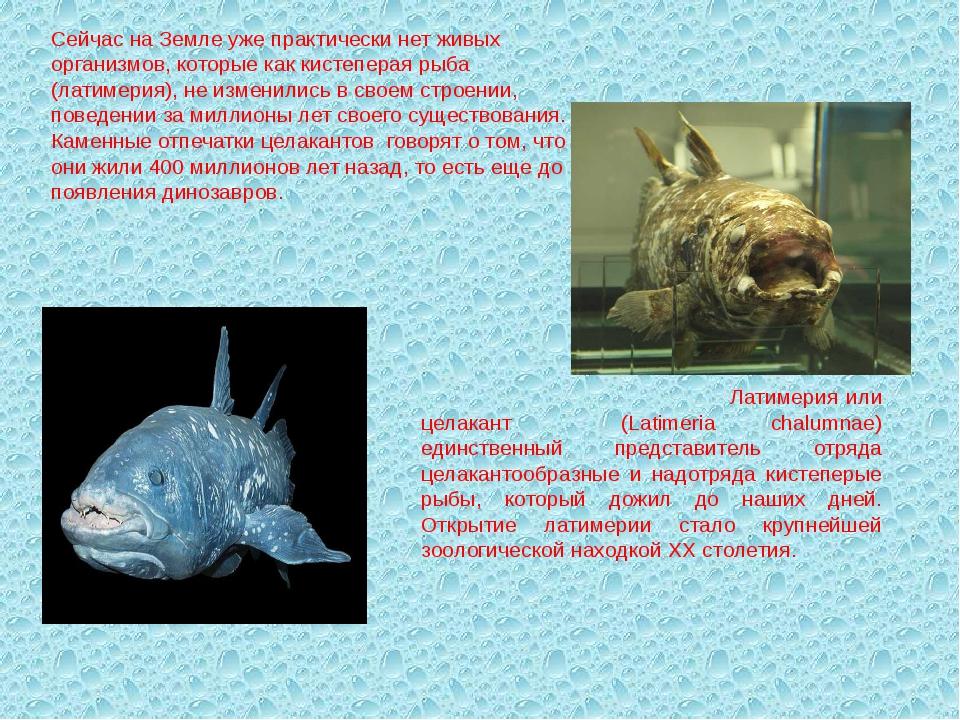 Сейчас на Земле уже практически нет живых организмов, которые как кистеперая...