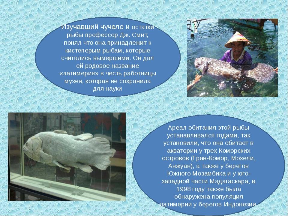 Изучавший чучело и остатки рыбы профессор Дж. Смит, понял что она принадлежит...