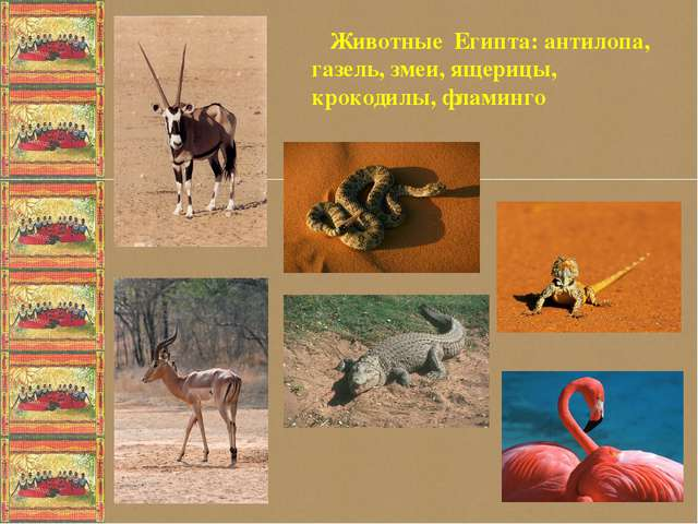 Животные Египта: антилопа, газель, змеи, ящерицы, крокодилы, фламинго