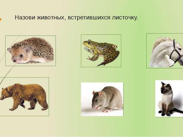 Назови животных, встретившихся листочку.