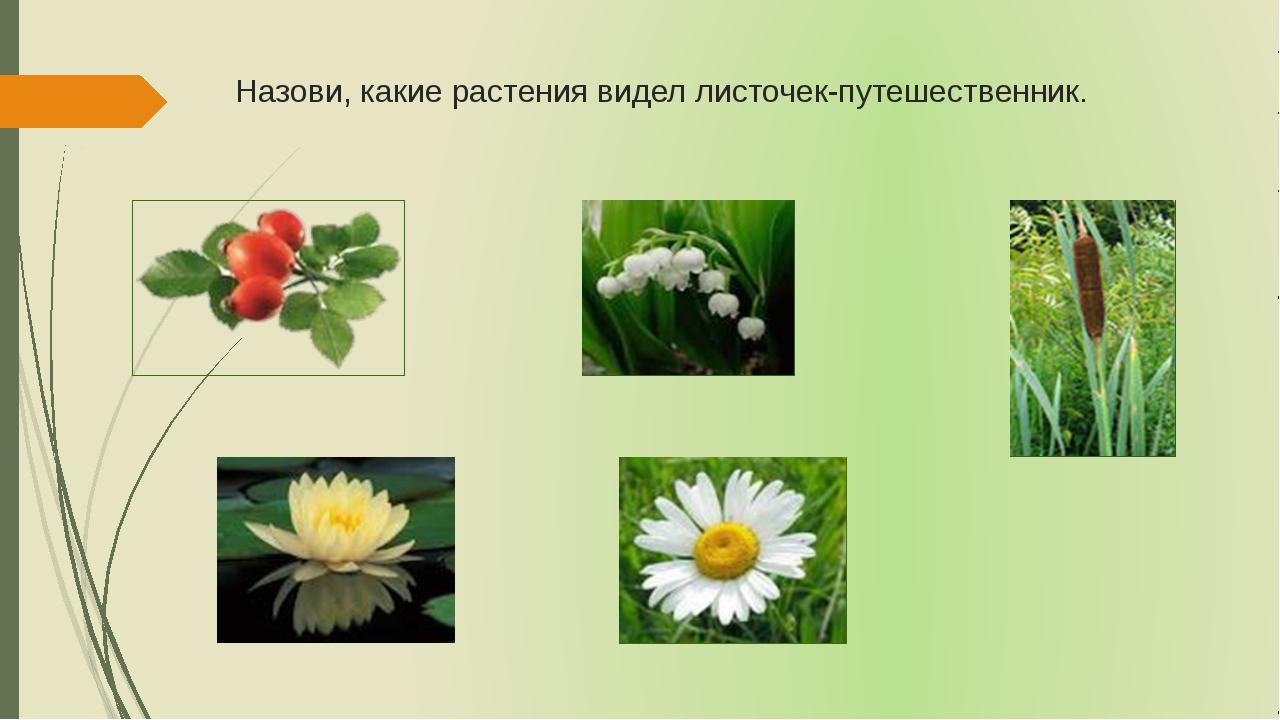 Назови, какие растения видел листочек-путешественник.