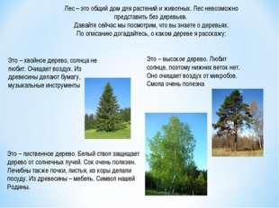 Лес – это общий дом для растений и животных. Лес невозможно представить без д