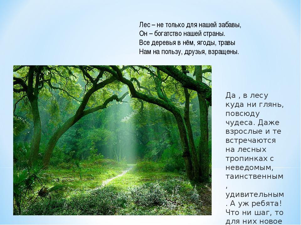 Лес – не только для нашей забавы, Он – богатство нашей страны. Все деревья в...