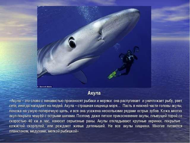 Акула «Акула – это слово с ненавистью произносят рыбаки и моряки: она распуги...