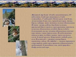 Животный мир богат: 44 вида млекопитающих, 185 видов птиц, 4 вида пресмыкающи