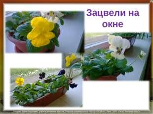Зацвели на окне Лазарева Лидия Андреевна, учитель начальных классов, Рижская