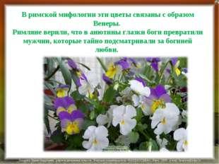В римской мифологии эти цветы связаны с образом Венеры. Римляне верили, что в