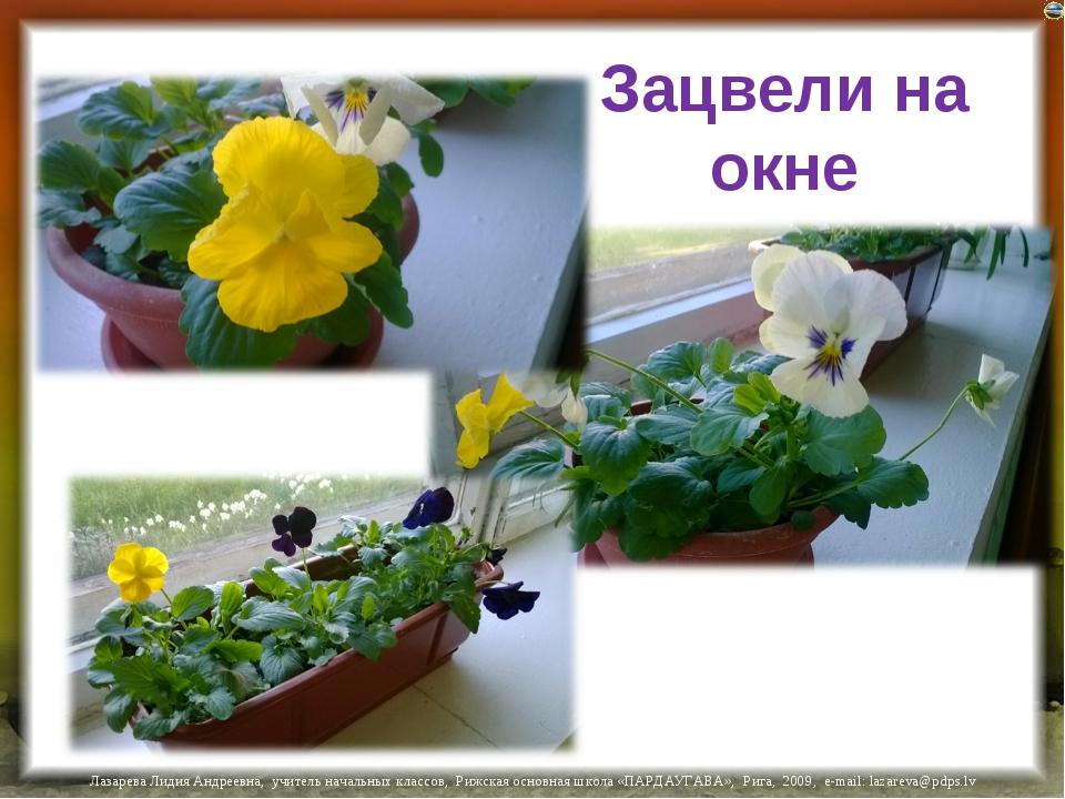 Зацвели на окне Лазарева Лидия Андреевна, учитель начальных классов, Рижская...