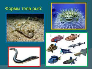 Формы тела рыб: