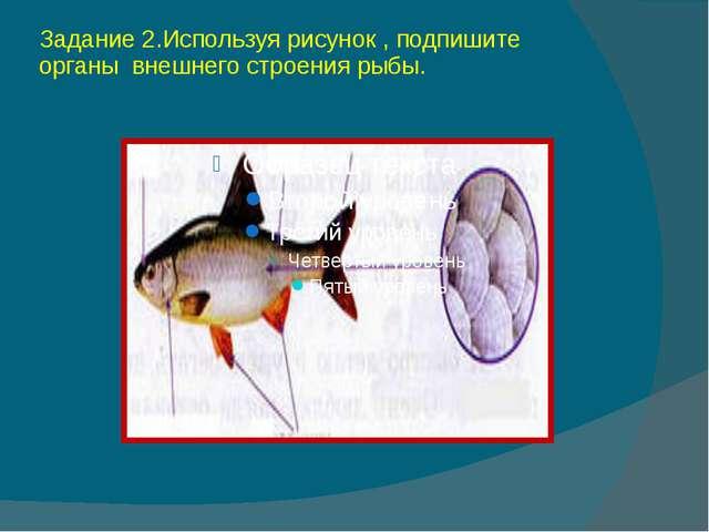 Задание 2.Используя рисунок , подпишите органы внешнего строения рыбы.