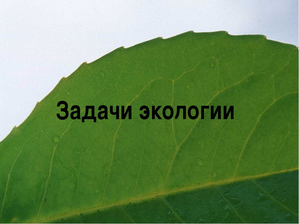Задачи экологии