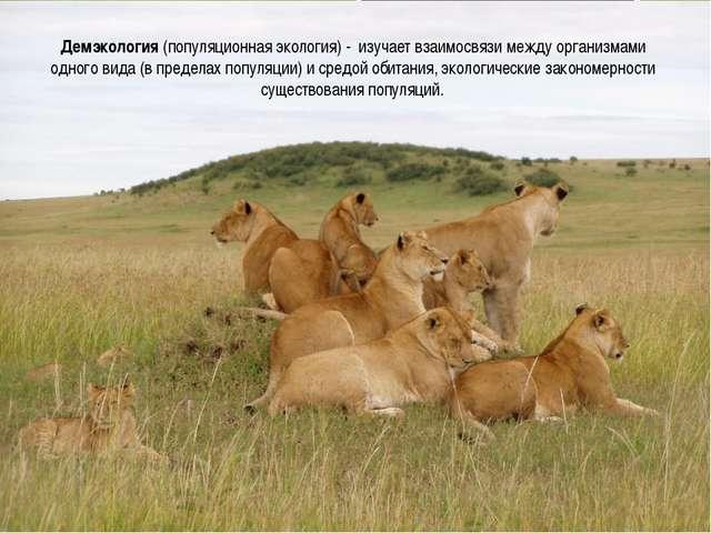 Демэкология (популяционная экология) - изучает взаимосвязи между организмами...