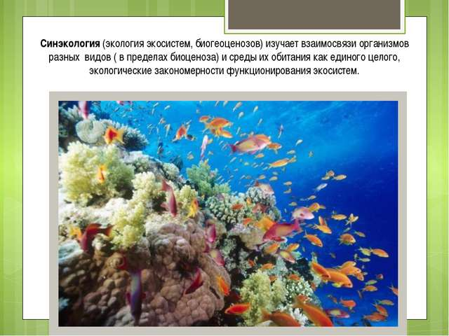 Синэкология (экология экосистем, биогеоценозов) изучает взаимосвязи организмо...