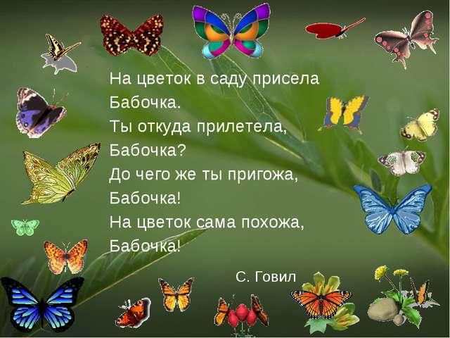 На цветок в саду присела Бабочка. Ты откуда прилетела, Бабочка? До чего же ты...