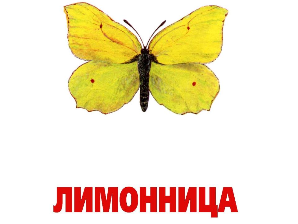 Конспект бабочки картинки с названием