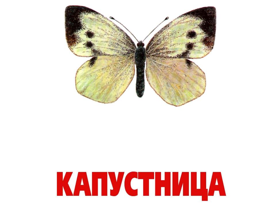 Месяцами, картинки бабочки с надписями