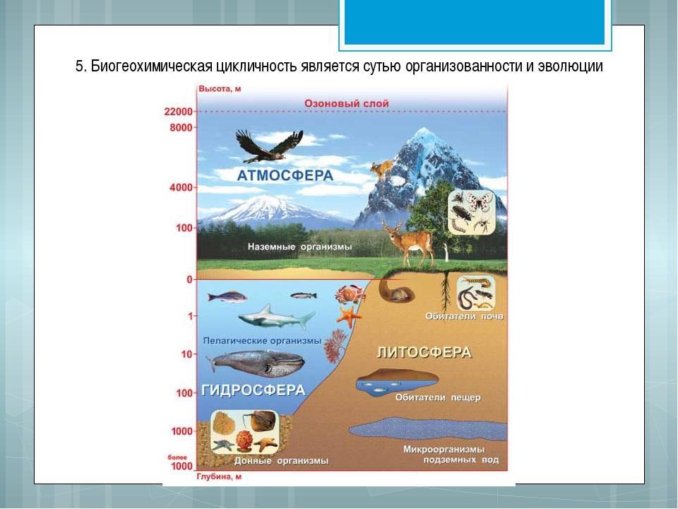 5. Биогеохимическая цикличность является сутью организованности и эволюции би...