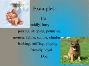 Cat cuddly, furry purring, sleeping, pouncing mouser, feline, canine, climbi