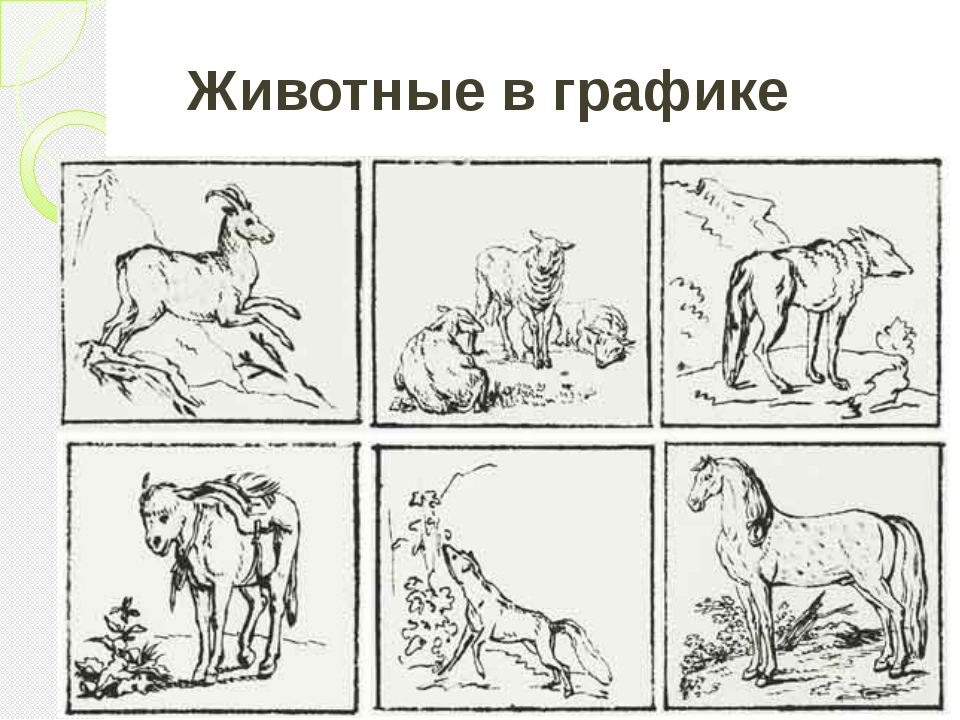Животные в графике