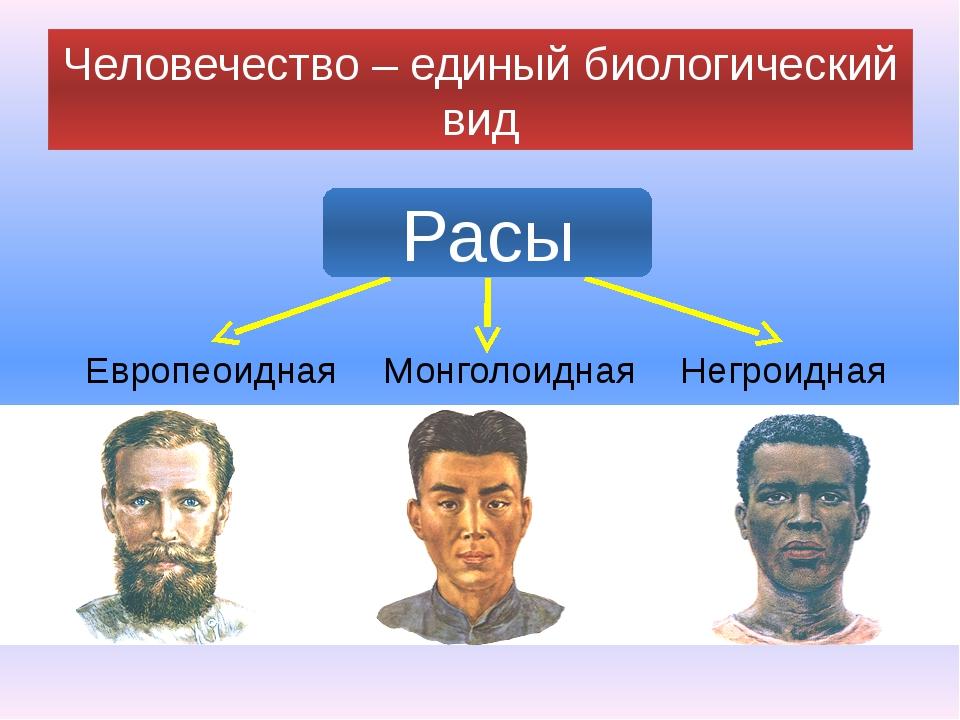 Человечество – единый биологический вид Европеоидная Монголоидная Негроидная...