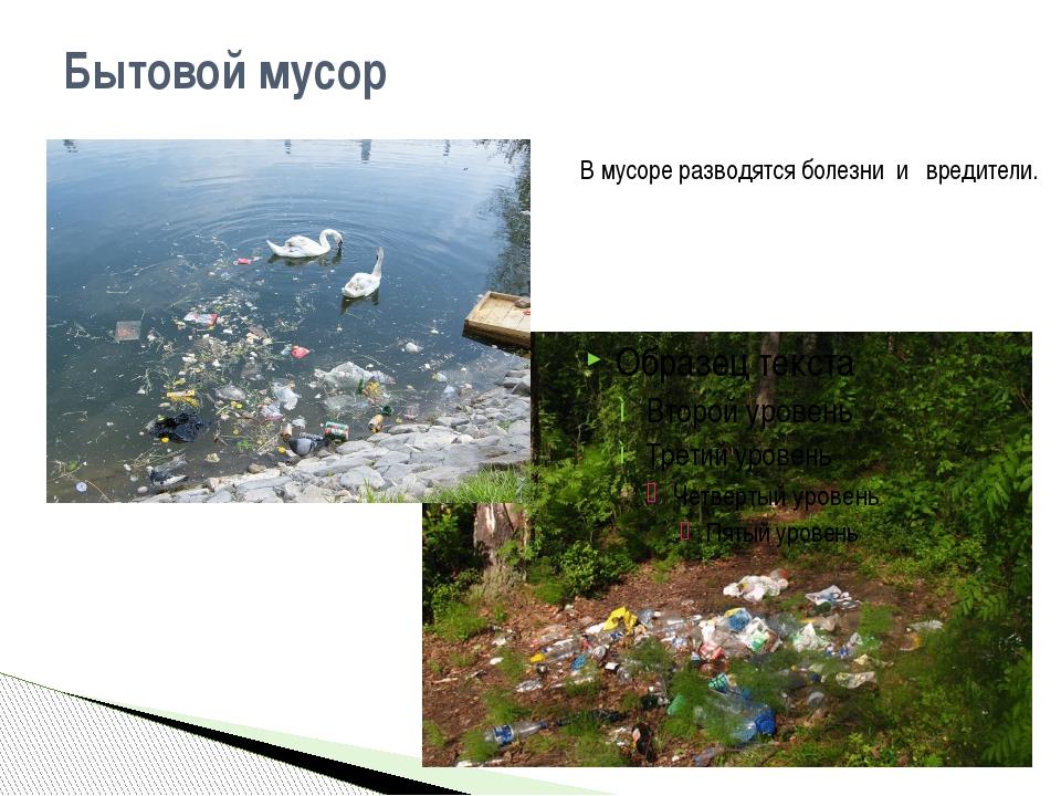 Бытовой мусор В мусоре разводятся болезни и вредители.