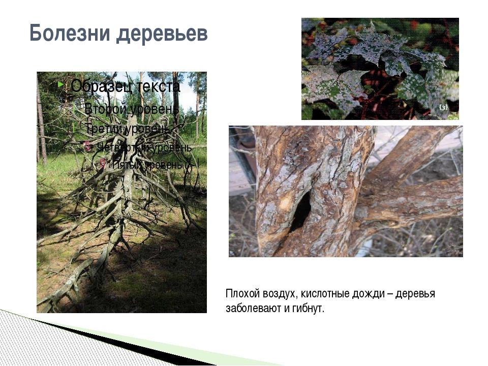Болезни деревьев Плохой воздух, кислотные дожди – деревья заболевают и гибнут.