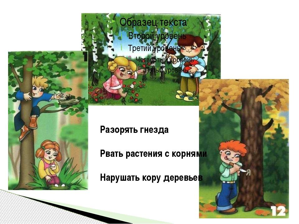 Разорять гнезда Рвать растения с корнями Нарушать кору деревьев