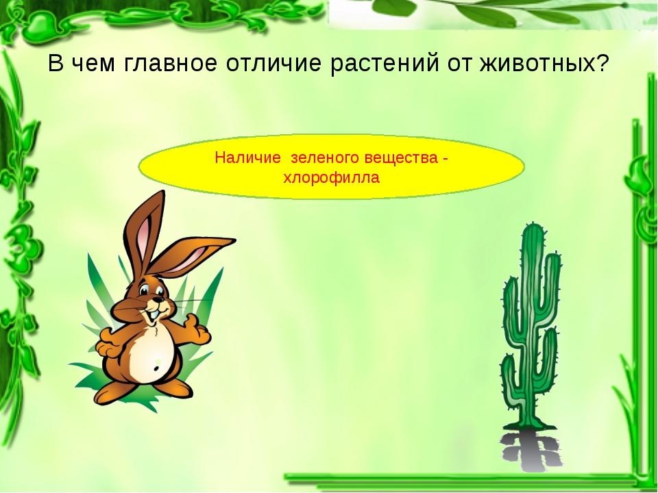 В чем главное отличие растений от животных? Наличие зеленого вещества - хлоро...